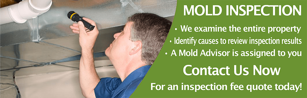 slide1 reduced Mold Remediation   Indianapolis Indiana