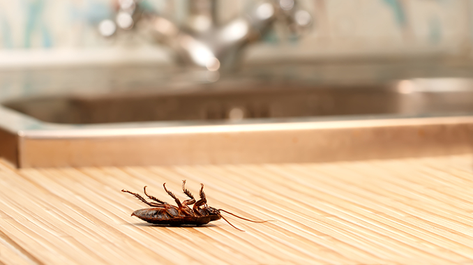 Mold And Bugs Does Mold Attract Bugs American Mold Experts