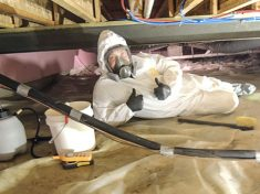mold remediation services that work